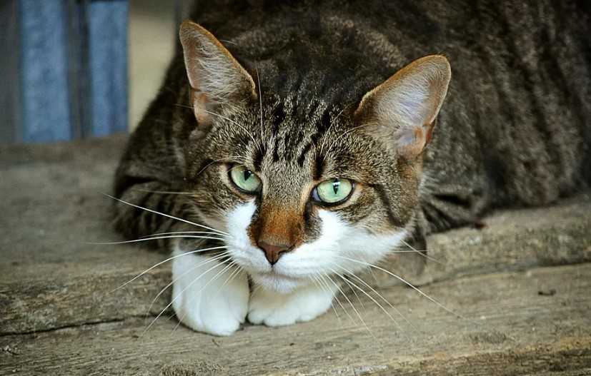 Problems That Owner Face in Cat Training