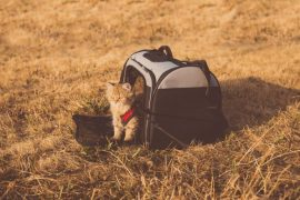 All You Need to Know About Using a Rolling Pet Carrier